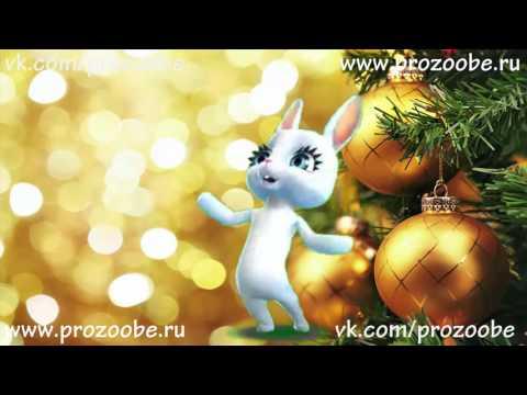 С Новым 2017 Годом ❅❅❅ Красивое поздравление от ZOOBE Зайки Домашней Хозяйки - Как поздравить с Днем Рождения