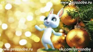 С Новым 2017 Годом ❅❅❅ Красивое поздравление от ZOOBE Зайки Домашней Хозяйки