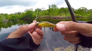 Casting Ikan gabus menggunkan Minnow, Gak nyangka Disamber ikan ini.....