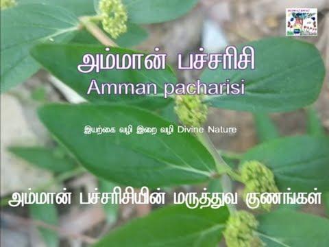 Amman Arisi - Natural cure for Pimples அம்மான் பச்சரிசியின் அற்புதப் பலன்கள்