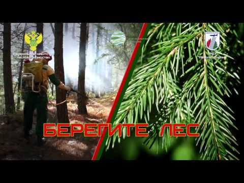Берегите лес от пожара!