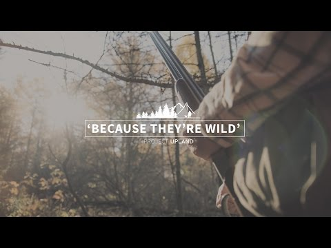 Because They're Wild- A Ruffed Grouse Society Bird Hunting Video