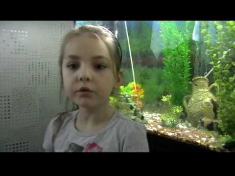 Пьют ли воду рыбы