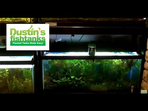 How to Find Cheap Fishtanks & Where I Bought My Tanks