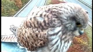 監視カメラは見た。カメラに興味津々な一羽の鳥さんを……。