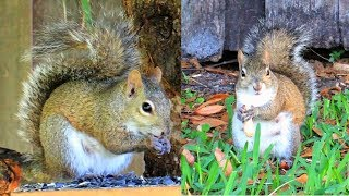 Two Mother Squirrels Under The Oak Tree