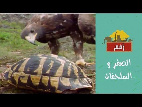 Omam | أُمم| الصقر و السلحفاة