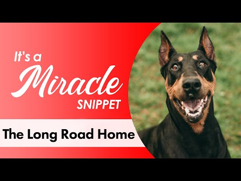 The Long Road Home - It's a Miracle - 6033