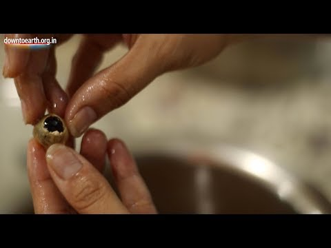 Make floor cleaners and dish-wash at home using reetha or soapnuts  with Kirti Negi Bajoria