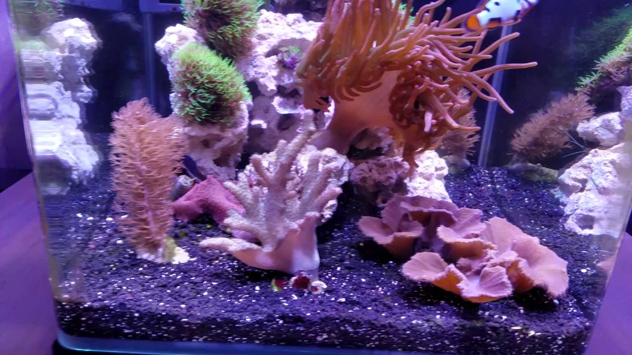 hd 9 gallon nano with helmeted picasso clowns youtube