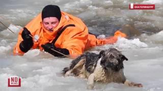 Спасатели вытаскивают тонущую собаку
