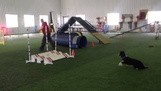 Purple - Agility Training With Kayl Mccann (16 Months)