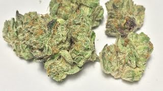 """Platinum Girl Scout Cookies"" - (Strain Review)"