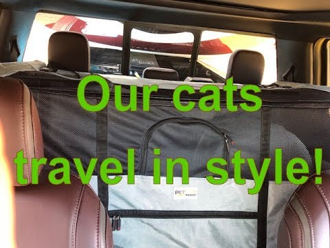Our Cats Travel In Style | Cats On The Move | Cats In RV