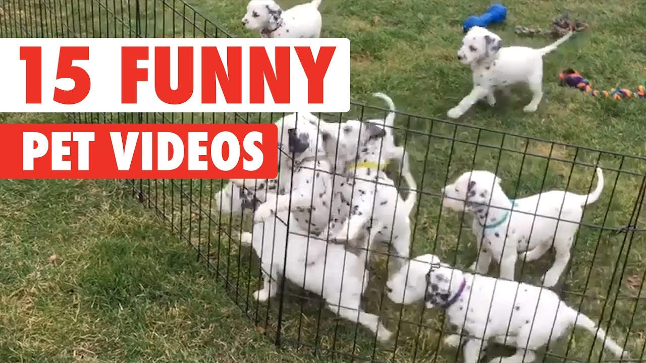 15 funny pet videos compilation 2017 funnycat tv