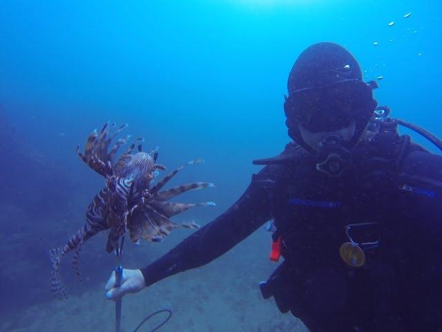 Lionfish Killer Hunts in Panama- 2 Dead!