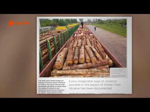 Факти ICTV: Контрабанда и санитарная вырубка: кто и зачем уничтожает леса Украины