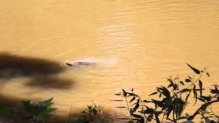 Yarkon river / Река Яркон / נחל ירקון