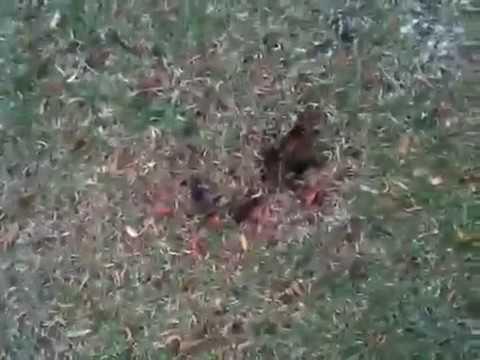 Strange Sinkhole In My Yard