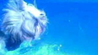 Chandler (shih-tzu) Is Swimming
