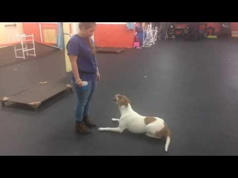 Training Classes   Trick Training for Kids   Solid K9 Training Dog Training