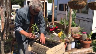 How to plant starter vegetables in a planter box