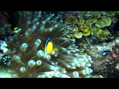 Diving in Bahrain (Abu Luthama) filmed by Ali Aman.