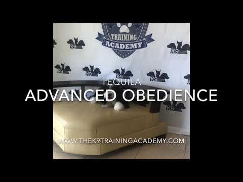 Orlando Dog training . K9 Tequila