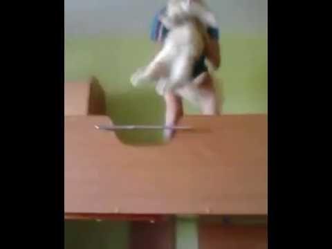 Мой кот делает сальто назад