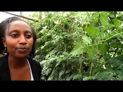 "Mkulima Young Champion - Utilizing an ""idle plot"" in Nairobi for farming"