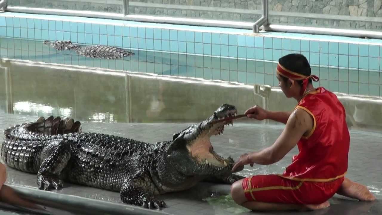 Crocodile farm show Pattaya HD 29-06-2011 part 1 - YouTube