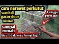 Cara Merawat Burung Perkutut Saat Beli Rajin Bunyi Gacor Sampai Rumah Setres Bisu Tidak Mau Manggung  Mp3 - Mp4 Download