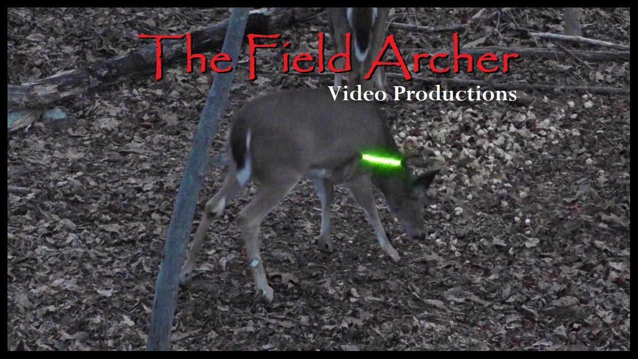 Deer Hunting: Crossbow Hunt Over Tulip Bulbs!