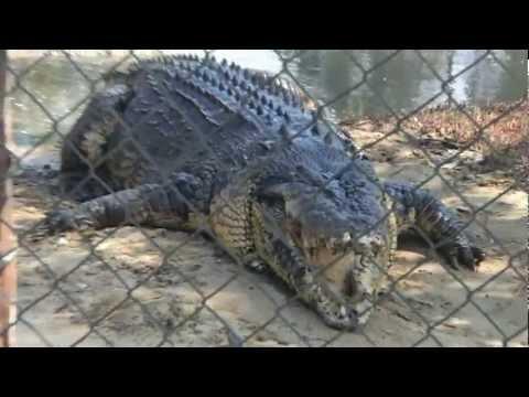 Koorana Crocodile Farm, Rockhampton, Queensland Australia