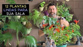 Veja Quais Plantas Pode Cultivar Dentro de Casa
