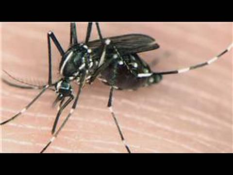 Mosquito Information Different Types Of Mosquitoes Youtube