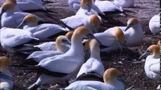 Живая природа. Красивый видео ролик.