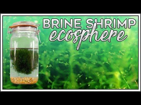 Brine Shrimp Ecosphere