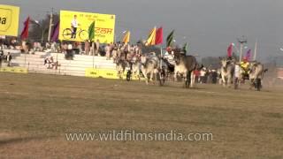 The Undisputed Rural Olympics: Bullock Cart Race in Kila Raipur Sports,