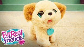 FurReal Friends Toys – Pax, My Poopin' Pup 'Cute Poop to the Max!' Official T.V. Spot – Hasbro