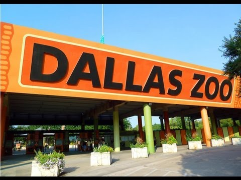 A Day at the Dallas Zoo: The Monorail Tour