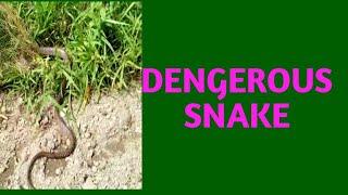 I catch A big snake nearby my house #Bikramdevnath
