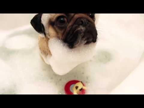 Carlino che fa il bagno