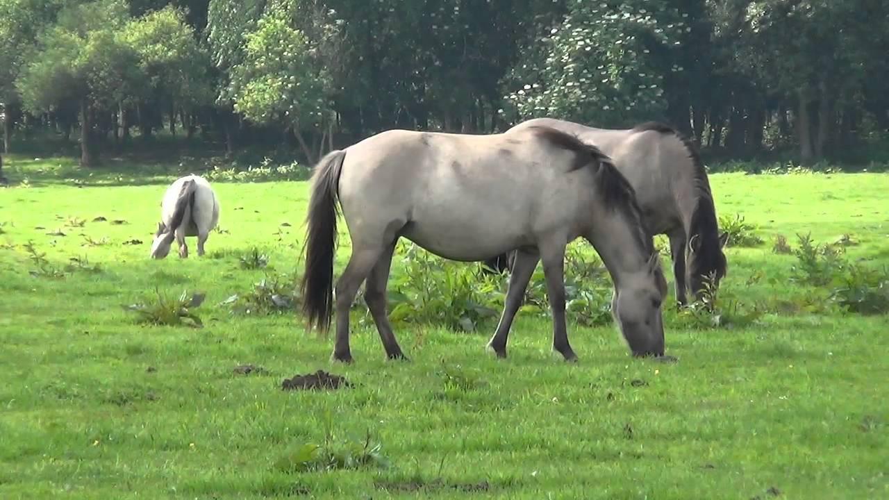 Omasex mit Natursekt in Freier Wildbahn