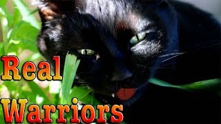 Warrior Cats In Real Life