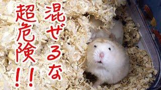 「KONDORIAN / こんどりあん 」のチャンネル登録お願いします☆ →https:/...