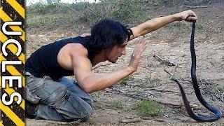 The dangerous Red Bellied Black Snake