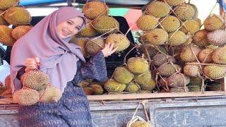 Cara Menanam Durian Dari Biji Agar Cepat Membuahkan Hasil
