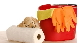 Golden Retriever: How To Potty Train Your Golden Retriever Free Mini Course For Golden Retrievers