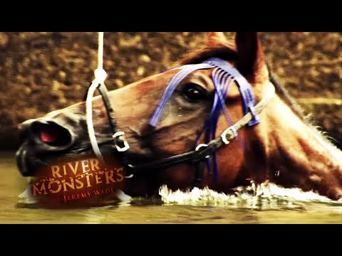 Mysterious Horse Attack | HORROR STORY | River Monsters